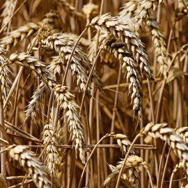 Was wir von der landwirtschaftlichen Revolution über Prozessoptimierung lernen können